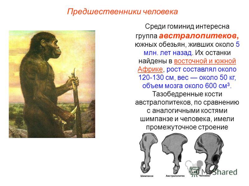 Среди гоминид интересна группа австралопитеков, южных обезьян, живших около 5 млн. лет назад. Их останки найдены в восточной и южной Африке, рост составлял около 120-130 см, вес около 50 кг, объем мозга около 600 см 3. Тазобедренные кости австралопит
