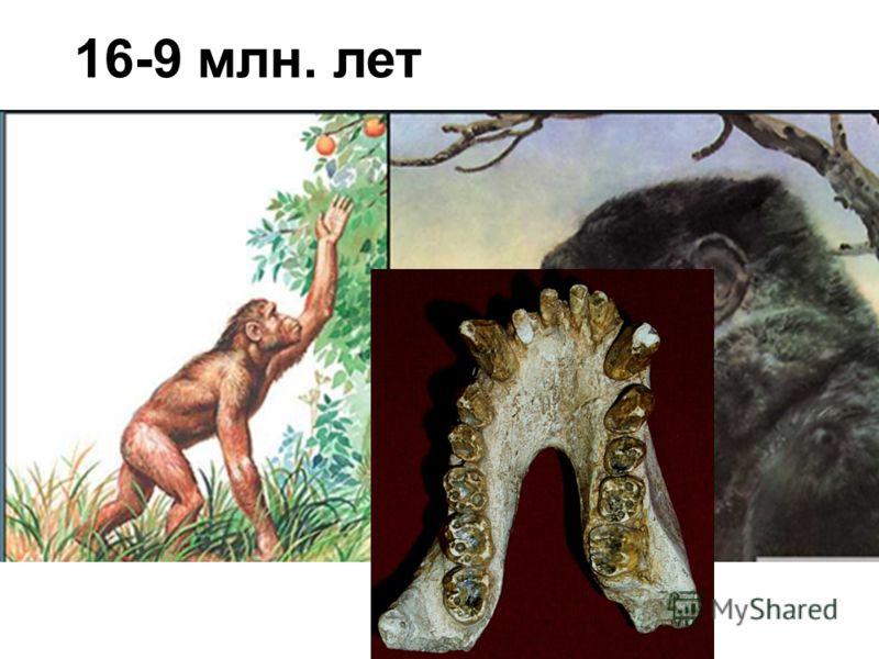 16-9 млн. лет