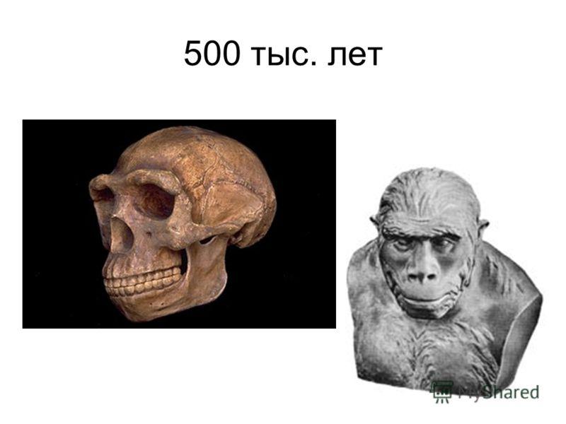 500 тыс. лет