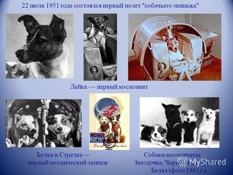 22 июля 1951 года состоялся первый полет собачьего экипажа Лайка первый космонавт Белка и Стрелка первый космический экипаж Собаки-космонавты: Звездочка, Чернушка, Стрелка и Белка (фото 1961 г.)