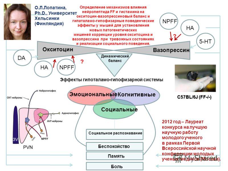 Эффекты гипоталамо-гипофизарной системы Окситоцин Вазопрессин Социальные Когнитивные Эмоциональные HANPFF HA NPFF Беспокойство Социальное распознавание Память Динамический баланс ? ? Определение механизмов влияния нейропептида FF и гистамина на оксит