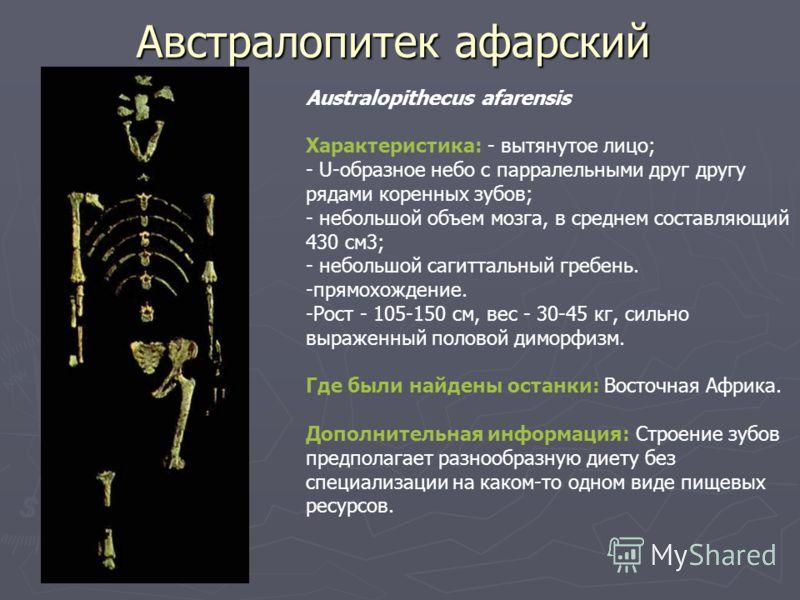Австралопитек афарский Australopithecus afarensis Характеристика: - вытянутое лицо; - U-образное небо с парралельными друг другу рядами коренных зубов; - небольшой объем мозга, в среднем составляющий 430 см3; - небольшой сагиттальный гребень. -прямох