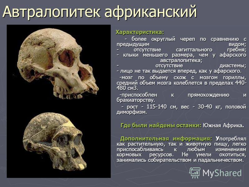 Автралопитек африканский Характеристика: Характеристика: - более округлый череп по сравнению с предыдущим видом; - отсутствие сагиттального гребня; - клыки меньшего размера, чем у афарского австралопитека; - отсутствие диастемы; - лицо не так выдаетс