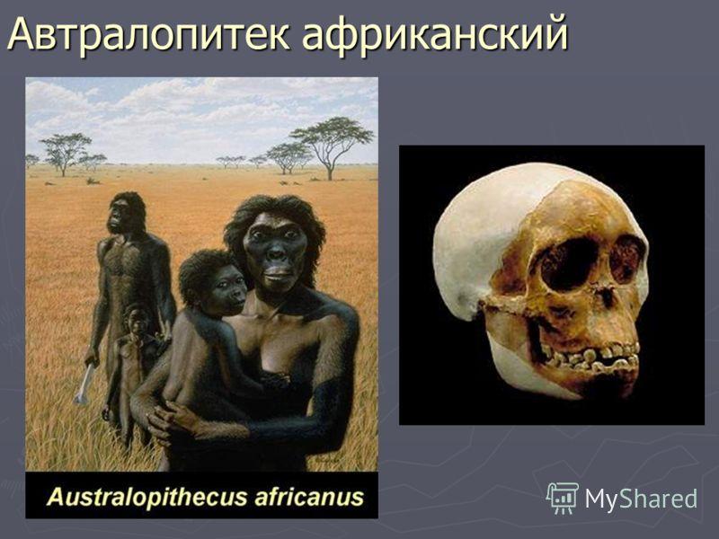 Автралопитек африканский
