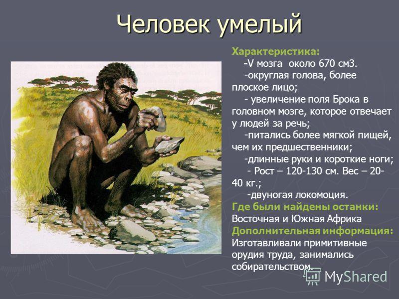 Человек умелый Характеристика: -V мозга около 670 см3. -округлая голова, более плоское лицо; - увеличение поля Брока в головном мозге, которое отвечает у людей за речь; -питались более мягкой пищей, чем их предшественники; -длинные руки и короткие но