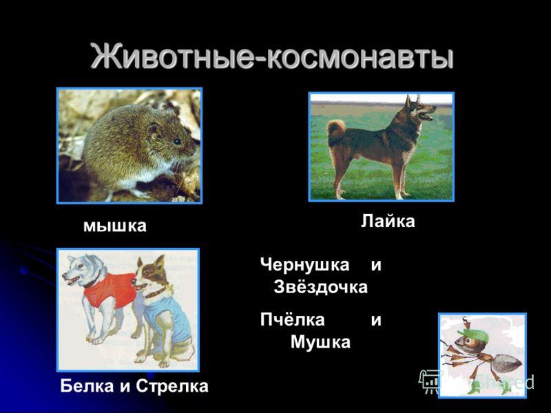 Животные-космонавты Лайка Чернушка и Звёздочка Пчёлка и Мушка Белка и Стрелкамышка
