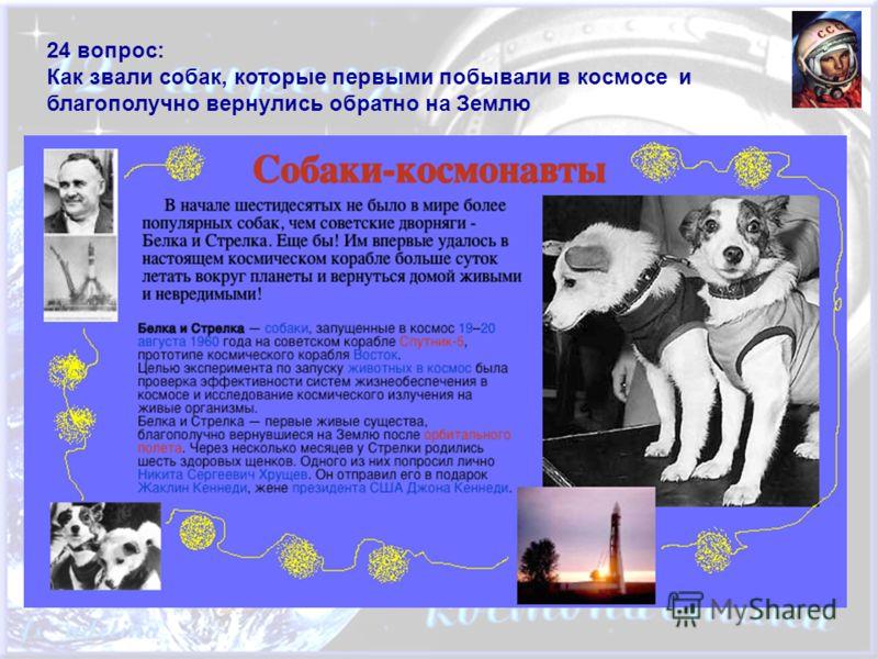 24 вопрос: Как звали собак, которые первыми побывали в космосе и благополучно вернулись обратно на Землю