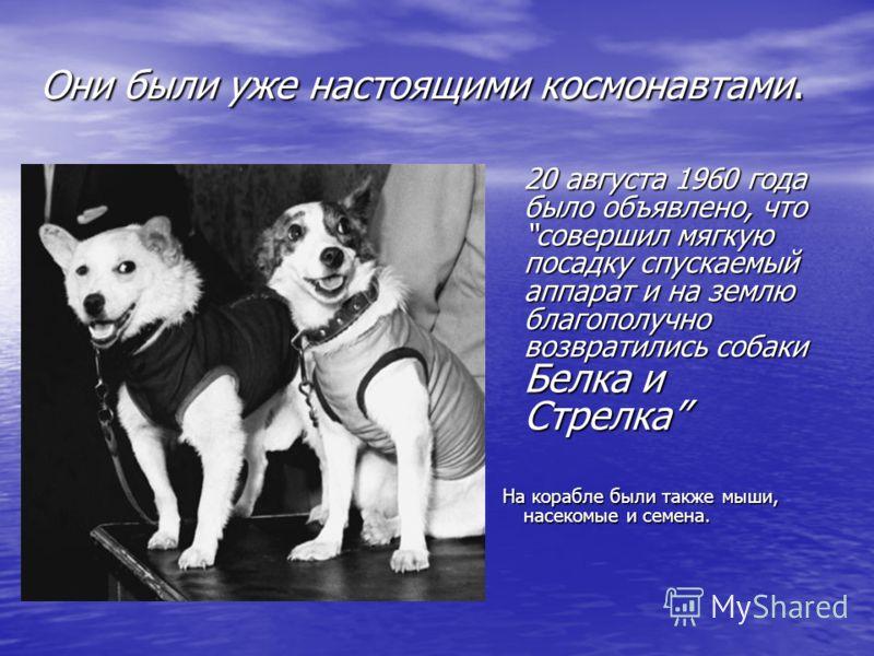 Они были уже настоящими космонавтами. 20 августа 1960 года было объявлено, что совершил мягкую посадку спускаемый аппарат и на землю благополучно возвратились собаки Белка и Стрелка На корабле были также мыши, насекомые и семена.