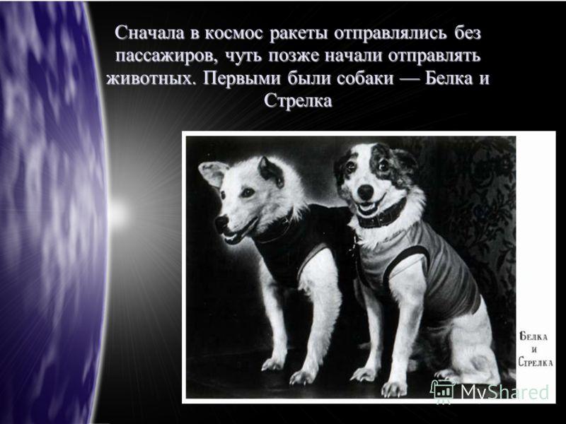 Сначала в космос ракеты отправлялись без пассажиров, чуть позже начали отправлять животных. Первыми были собаки Белка и Стрелка