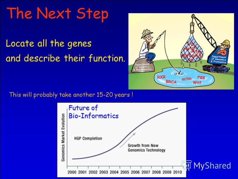 29 The Next Step Locate all the genes and describe their function. This will probably take another 15-20 years ! Future of Bio-Informatics