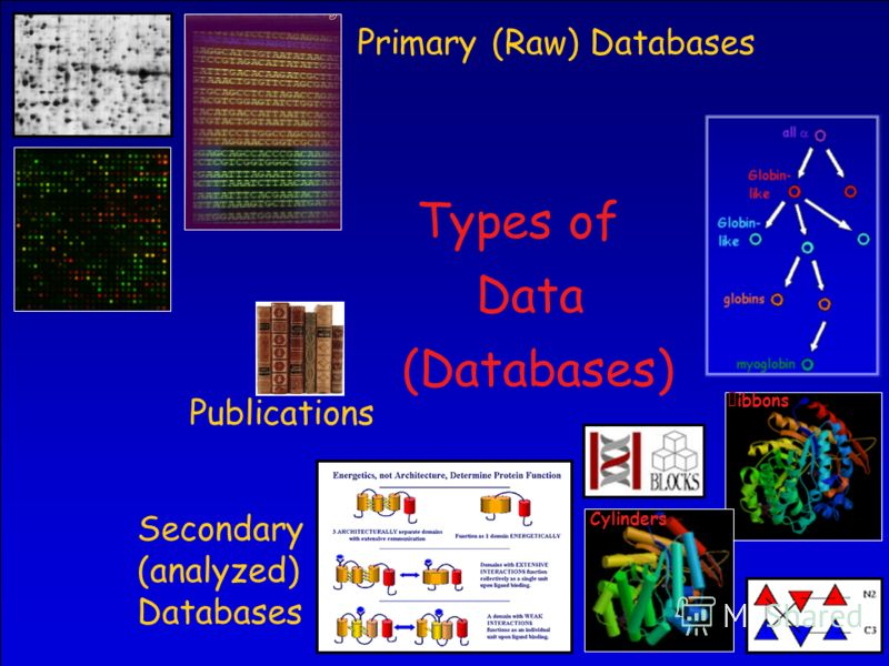 31 Types of Data (Databases) Primary (Raw) Databases ibbons Cylinders Secondary (analyzed) Databases Publications