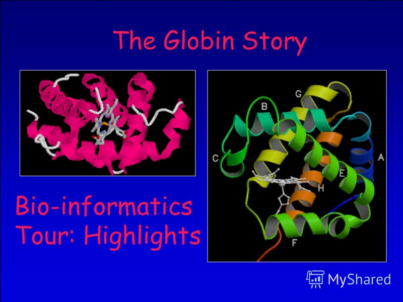 33 The Globin Story Bio-informatics Tour: Highlights