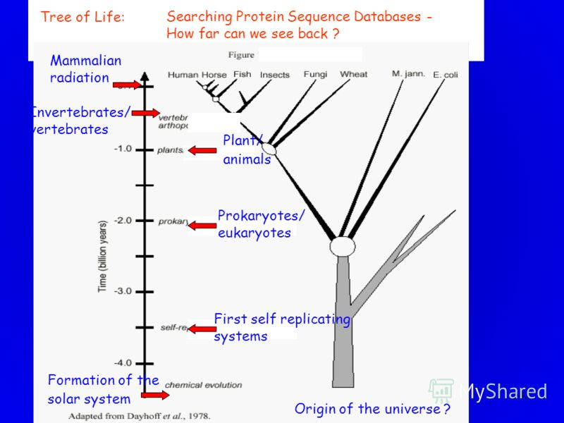 43 Origin of the universe ? Formation of the solar system First self replicating systems Prokaryotes/ eukaryotes Plant/ animals Invertebrates/ vertebrates Mammalian radiation Tree of Life: Searching Protein Sequence Databases - How far can we see bac