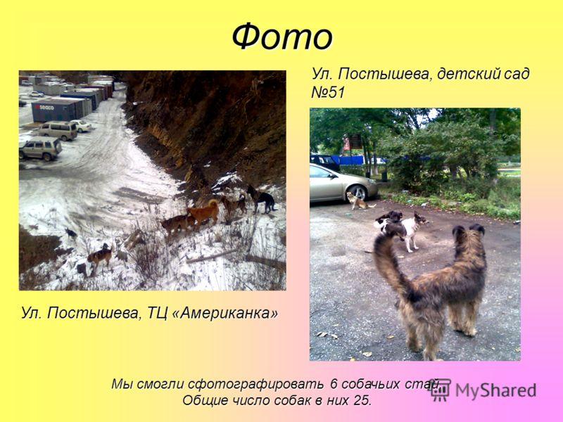 Фото Ул. Постышева, детский сад 51 Ул. Постышева, ТЦ «Американка» Мы смогли сфотографировать 6 собачьих стай. Общие число собак в них 25.