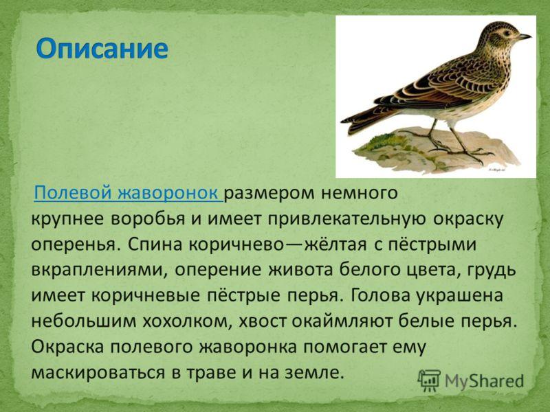 Полевой жаворонок размером немного крупнее воробья и имеет привлекательную окраску оперенья. Спина коричневожёлтая с пёстрыми вкраплениями, оперение живота белого цвета, грудь имеет коричневые пёстрые перья. Голова украшена небольшим хохолком, хвост