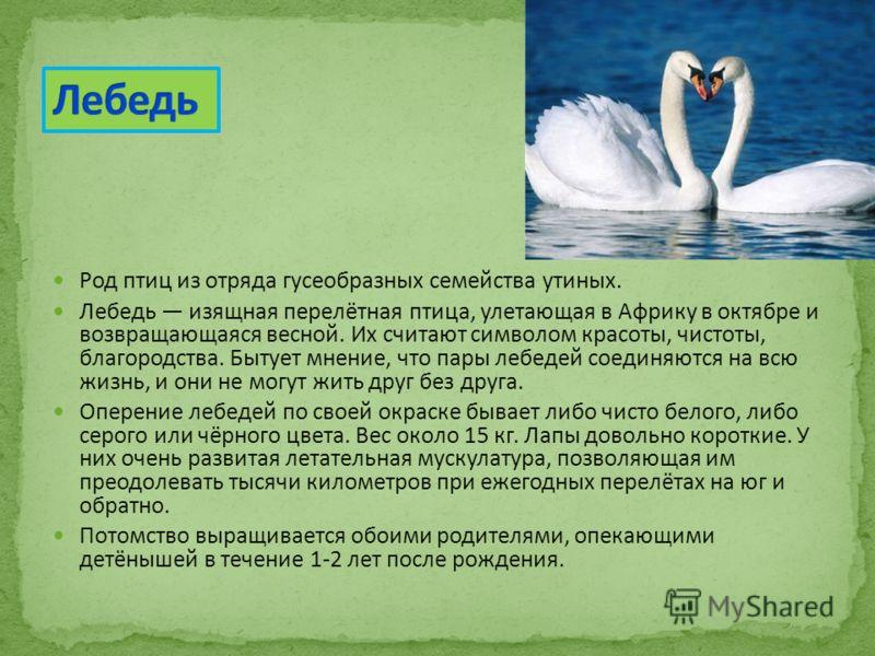 Род птиц из отряда гусеобразных семейства утиных. Лебедь изящная перелётная птица, улетающая в Африку в октябре и возвращающаяся весной. Их считают символом красоты, чистоты, благородства. Бытует мнение, что пары лебедей соединяются на всю жизнь, и о