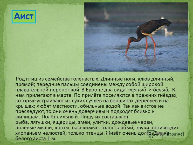 Род птиц из семейства голенастых. Длинные ноги, клюв длинный, прямой; передние пальцы соединены между собой широкой плавательной перепонкой. В Европе два вида: чёрный и белый. К нам прилетают в марте. По прилёте поселяются в прежних гнёздах, которые