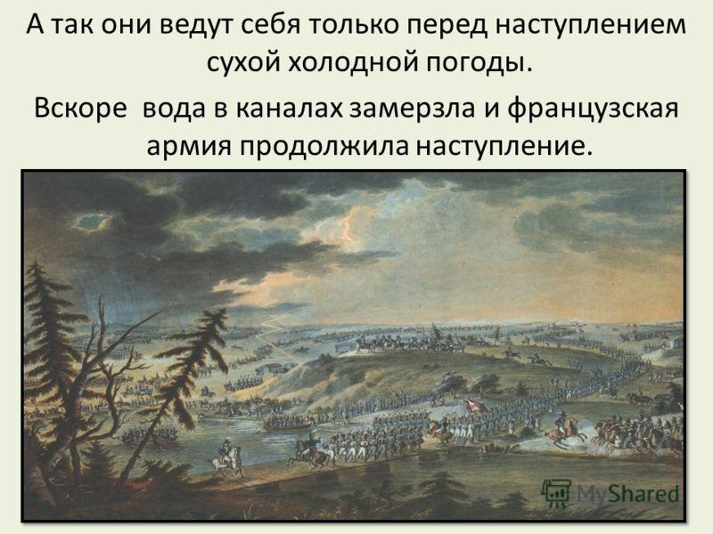 А так они ведут себя только перед наступлением сухой холодной погоды. Вскоре вода в каналах замерзла и французская армия продолжила наступление.