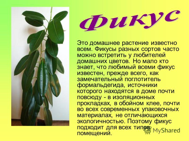Это домашнее растение известно всем. Фикусы разных сортов часто можно встретить у любителей домашних цветов. Но мало кто знает, что любимый всеми фикус известен, прежде всего, как замечательный поглотитель формальдегида, источники которого находятся