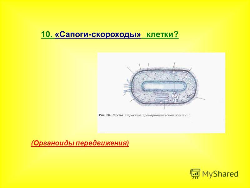 10. «Сапоги-скороходы» клетки? (Органоиды передвижения)