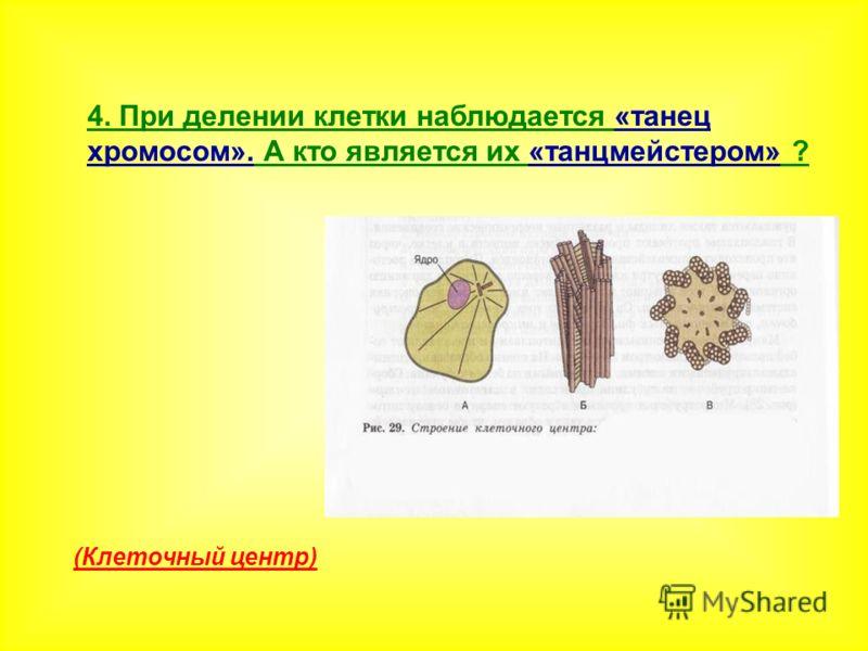 4. При делении клетки наблюдается «танец хромосом». А кто является их «танцмейстером» ? (Клеточный центр)