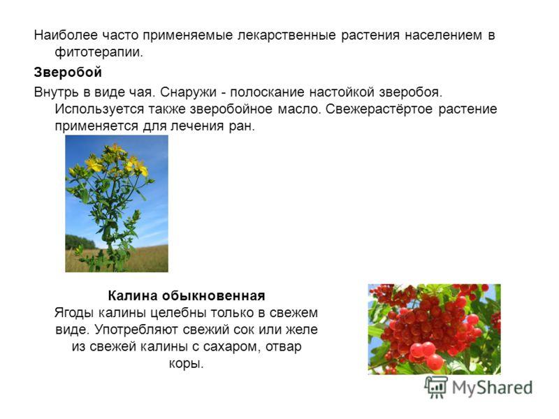 Наиболее часто применяемые лекарственные растения населением в фитотерапии. Зверобой Внутрь в виде чая. Снаружи - полоскание настойкой зверобоя. Используется также зверобойное масло. Свежерастёртое растение применяется для лечения ран. Калина обыкнов