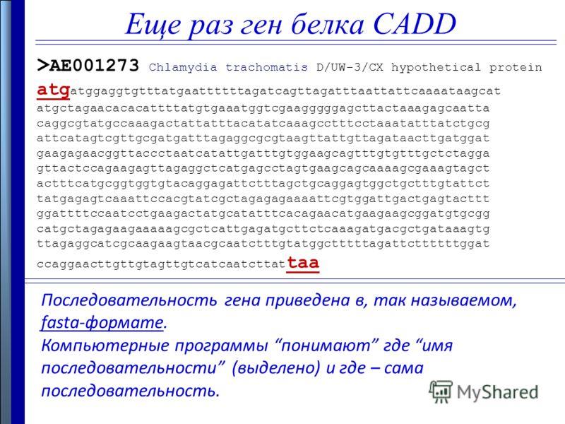 Еще раз ген белка CADD Последовательность гена приведена в, так называемом, fasta-формате. Компьютерные программы понимают где имя последовательности (выделено) и где – сама последовательность. > AE001273 Chlamydia trachomatis D/UW-3/CX hypothetical