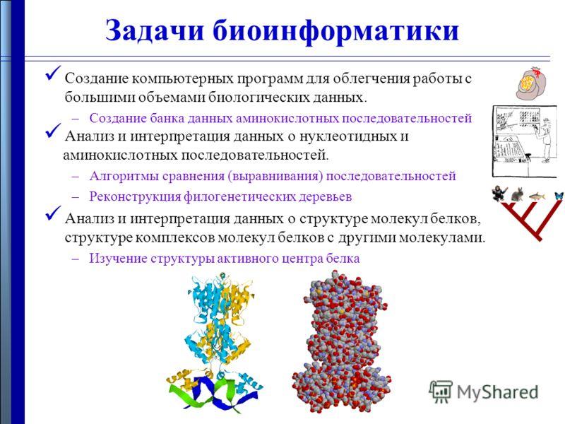 Создание компьютерных программ для облегчения работы с большими объемами биологических данных. –Создание банка данных аминокислотных последовательностей Анализ и интерпретация данных о нуклеотидных и аминокислотных последовательностей. –Алгоритмы сра