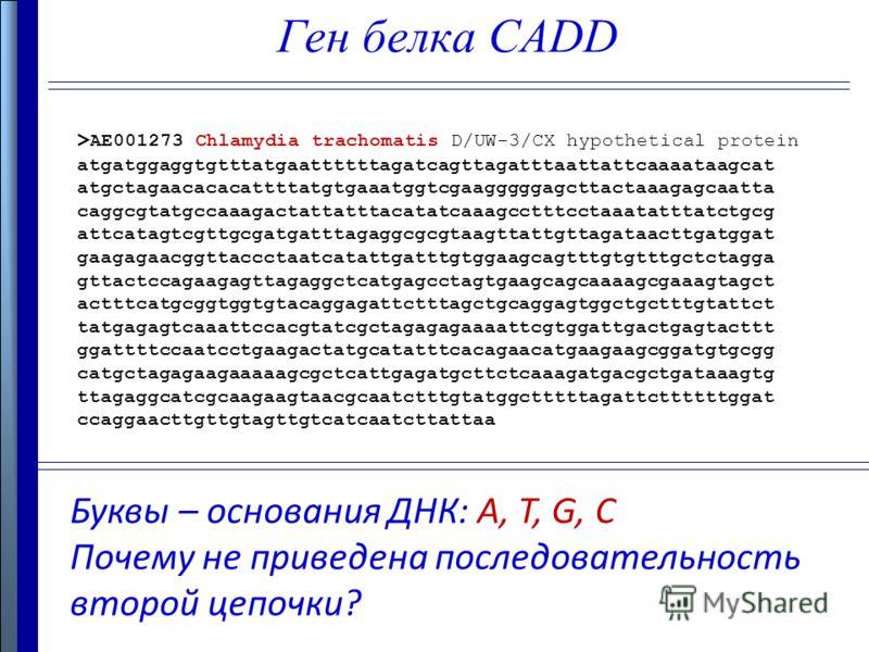 Ген белка CADD Буквы – основания ДНК: A, T, G, C Почему не приведена последовательность второй цепочки? > AE001273 Chlamydia trachomatis D/UW-3/CX hypothetical protein atgatggaggtgtttatgaattttttagatcagttagatttaattattcaaaataagcat atgctagaacacacattttat