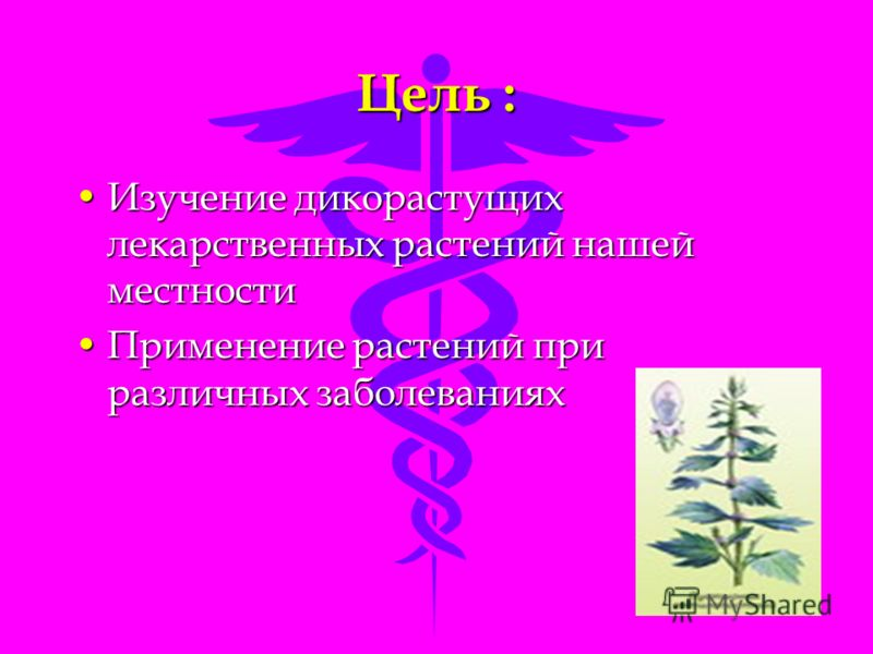 Цель : Изучение дикорастущих лекарственных растений нашей местностиИзучение дикорастущих лекарственных растений нашей местности Применение растений при различных заболеванияхПрименение растений при различных заболеваниях