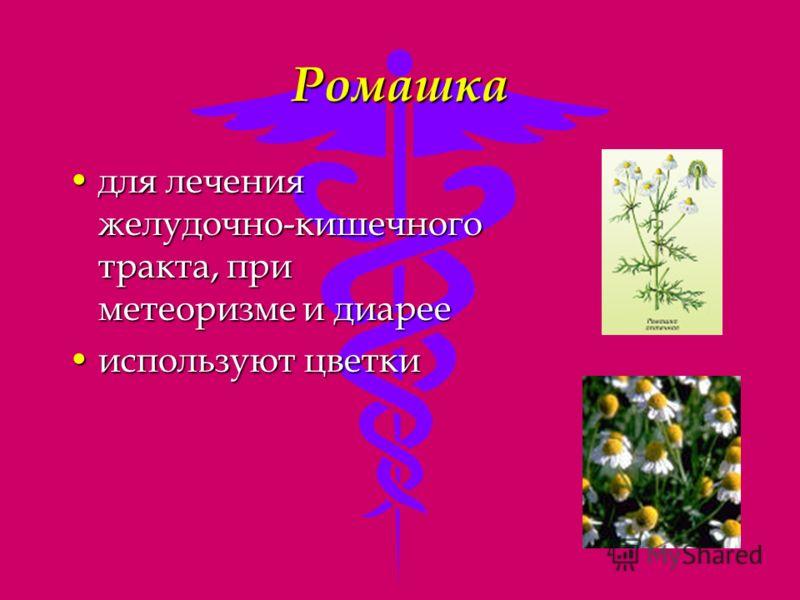 Ромашка для лечения желудочно-кишечного тракта, при метеоризме и диареедля лечения желудочно-кишечного тракта, при метеоризме и диарее используют цветкииспользуют цветки
