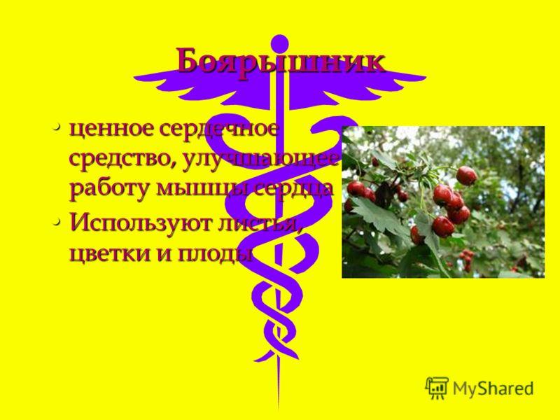 Боярышник ценное сердечное средство, улучшающее работу мышцы сердцаценное сердечное средство, улучшающее работу мышцы сердца Используют листья, цветки и плодыИспользуют листья, цветки и плоды