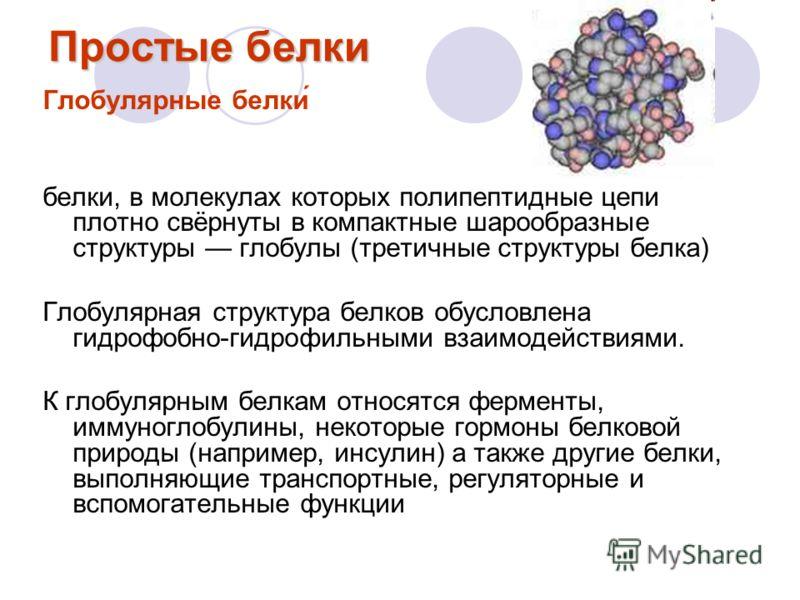 Простые белки Глобулярные белки́ белки, в молекулах которых полипептидные цепи плотно свёрнуты в компактные шарообразные структуры глобулы (третичные структуры белка) Глобулярная структура белков обусловлена гидрофобно-гидрофильными взаимодействиями.