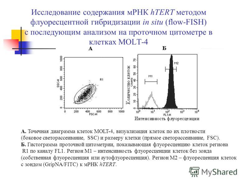 Исследование содержания мРНК hTERT методом флуоресцентной гибридизации in situ (flow-FISH) с последующим анализом на проточном цитометре в клетках MOLT-4 А. Точечная диаграмма клеток MOLT-4, визуализация клеток по их плотности (боковое светорассеиван