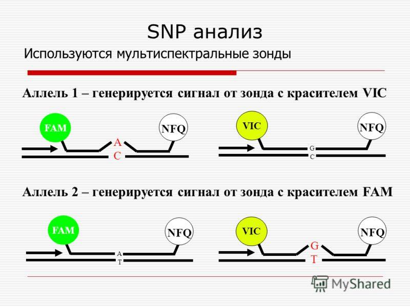 SNP анализ GCGC ACAC NFQ FAM VIC GTGT ATAT FAM VIC NFQ Аллель 1 – генерируется сигнал от зонда с красителем VIC Используются мультиспектральные зонды Аллель 2 – генерируется сигнал от зонда с красителем FAM