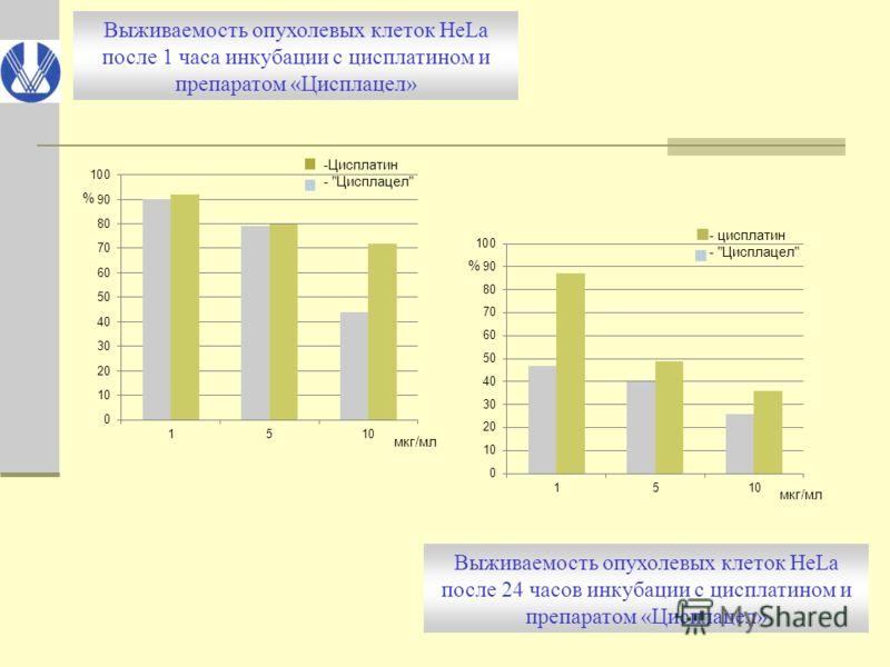 Выживаемость опухолевых клеток HeLa после 1 часа инкубации с цисплатином и препаратом «Цисплацел» Выживаемость опухолевых клеток HeLa после 24 часов инкубации с цисплатином и препаратом «Цисплацел»