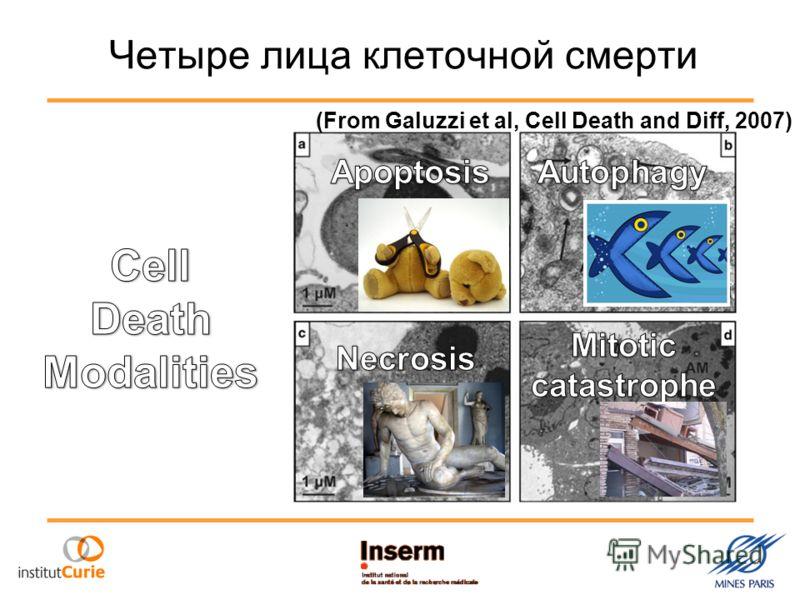 Четыре лица клеточной смерти (From Galuzzi et al, Cell Death and Diff, 2007)