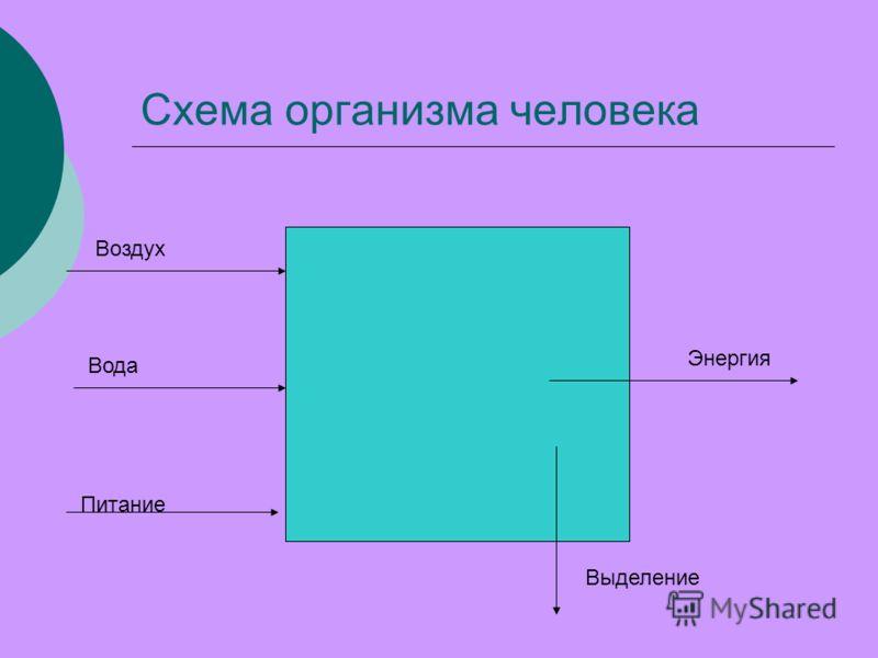 Схема организма человека Воздух Вода Питание Энергия Выделение