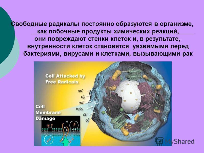 Свободные радикалы постоянно образуются в организме, как побочные продукты химических реакций, они повреждают стенки клеток и, в результате, внутренности клеток становятся уязвимыми перед бактериями, вирусами и клетками, вызывающими рак