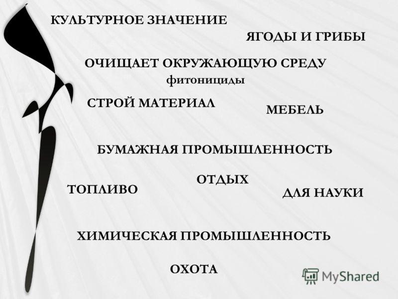 СТРОЙ МАТЕРИАЛ БУМАЖНАЯ ПРОМЫШЛЕННОСТЬ ТОПЛИВО ХИМИЧЕСКАЯ ПРОМЫШЛЕННОСТЬ МЕБЕЛЬ ОТДЫХ ЯГОДЫ И ГРИБЫ ОЧИЩАЕТ ОКРУЖАЮЩУЮ СРЕДУ фитонициды КУЛЬТУРНОЕ ЗНАЧЕНИЕ ДЛЯ НАУКИ ОХОТА