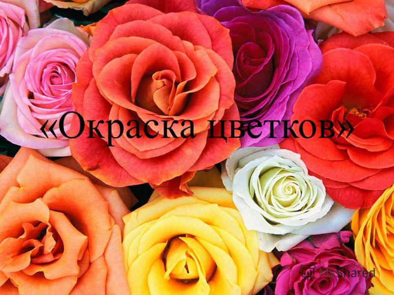 «Окраска цветков»