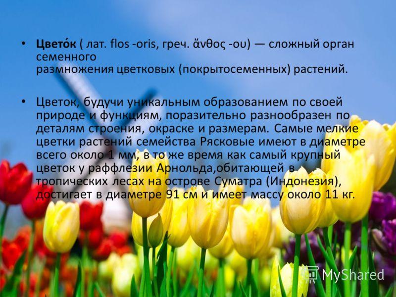 Цвето́к ( лат. flos -oris, греч. νθος -ου) сложный орган семенного размножения цветковых (покрытосеменных) растений. Цветок, будучи уникальным образованием по своей природе и функциям, поразительно разнообразен по деталям строения, окраске и размерам