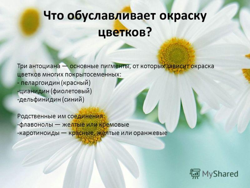 Что обуславливает окраску цветков? Три антоциана основные пигменты, от которых зависит окраска цветков многих покрытосеменных: - пеларгоидин (красный) -цианидин (фиолетовый) -дельфинидин (синий) Родственные им соединения: -флавонолы желтые или кремов