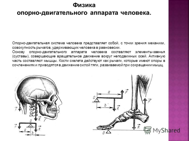 Физика опорно-двигательного аппарата человека. Опорно-двигательная система человека представляет собой, с точки зрения механики, совокупность рычагов, удерживающих человека в равновесии. Основу опорно-двигательного аппарата человека составляют элемен
