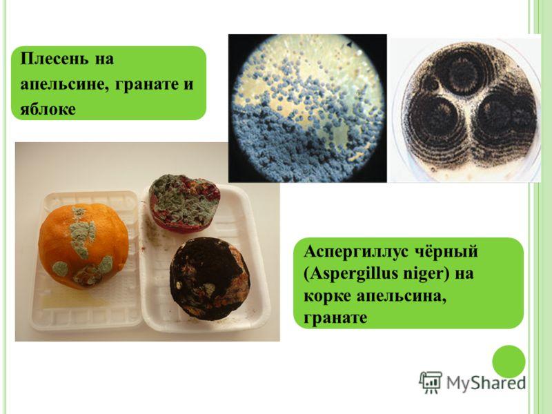 Плесень на апельсине, гранате и яблоке Аспергиллус чёрный (Aspergillus niger) на корке апельсина, гранате