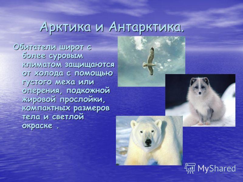 Арктика и Антарктика. Арктика и Антарктика. Обитатели широт с более суровым климатом защищаются от холода с помощью густого меха или оперения, подкожной жировой прослойки, компактных размеров тела и светлой окраске.