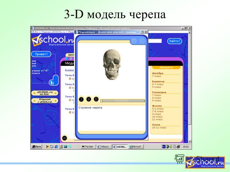 3-D модель черепа