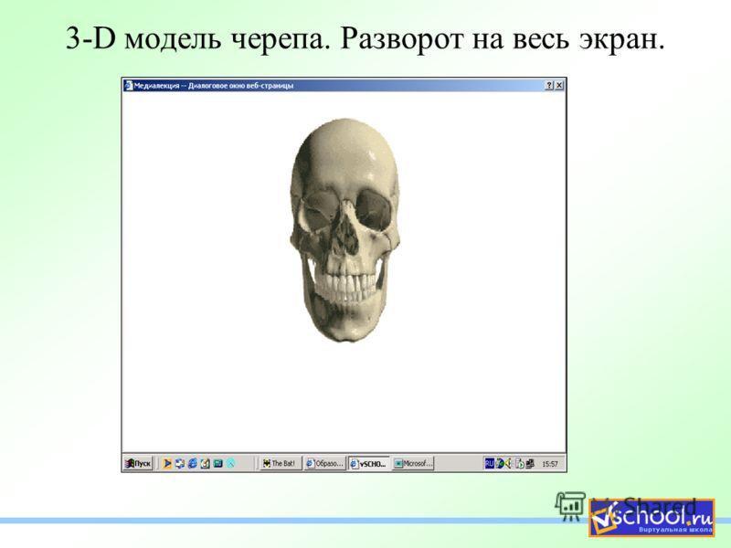 3-D модель черепа. Разворот на весь экран.