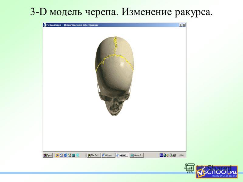 3-D модель черепа. Изменение ракурса.