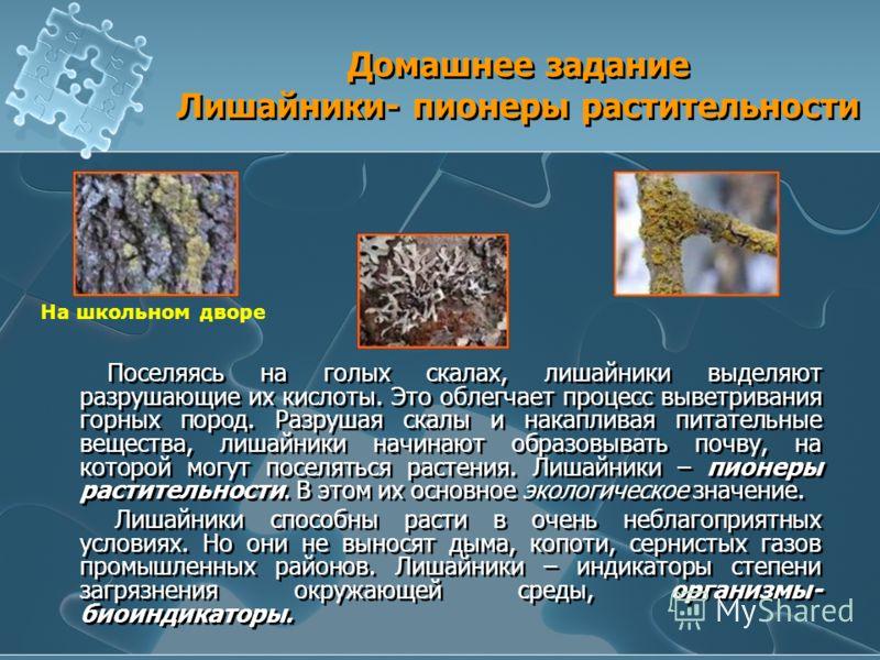 Домашнее задание Лишайники- пионеры растительности Поселяясь на голых скалах, лишайники выделяют разрушающие их кислоты. Это облегчает процесс выветривания горных пород. Разрушая скалы и накапливая питательные вещества, лишайники начинают образовыват